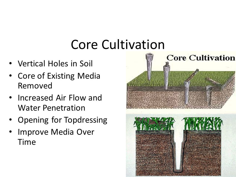 Core Cultivation Vertical Holes in Soil Core of Existing Media Removed