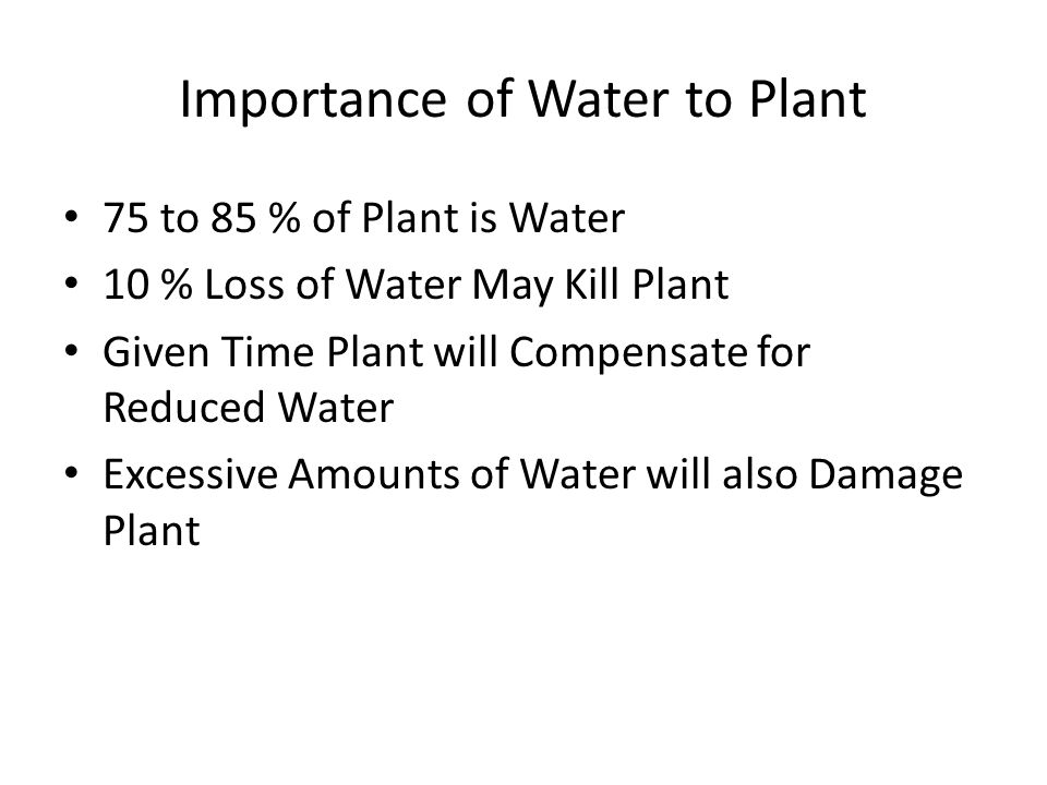 Importance of Water to Plant