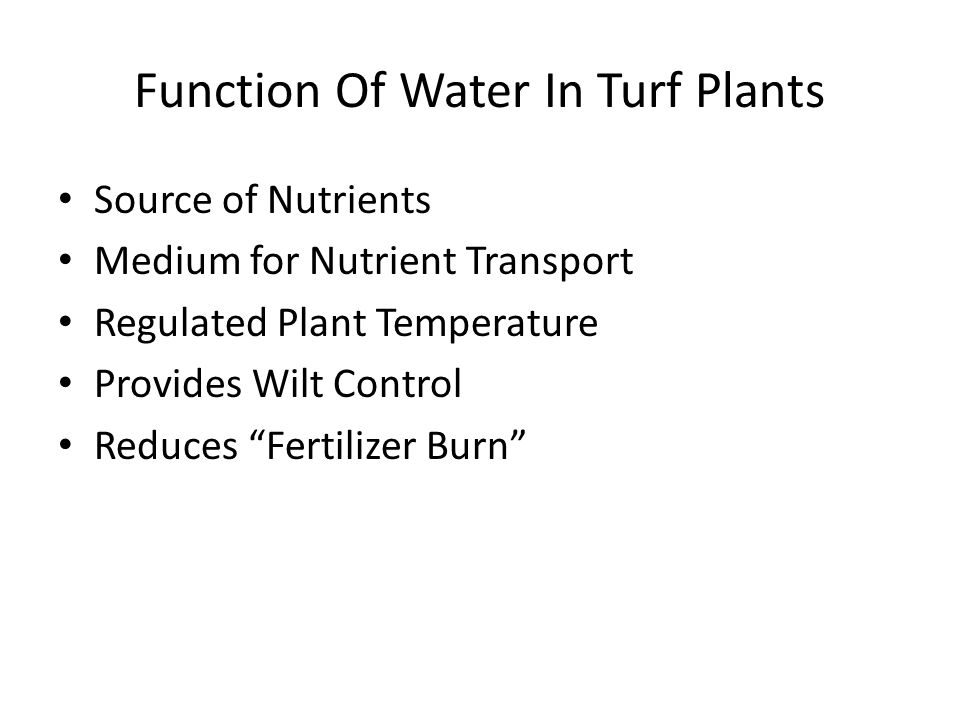 Function Of Water In Turf Plants