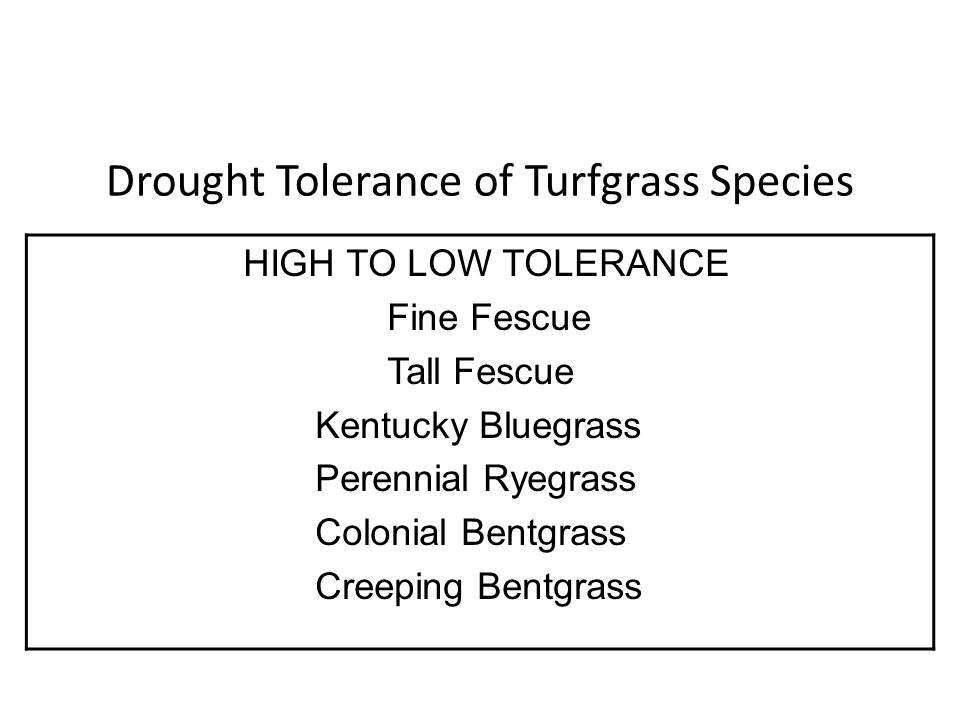 Drought Tolerance of Turfgrass Species