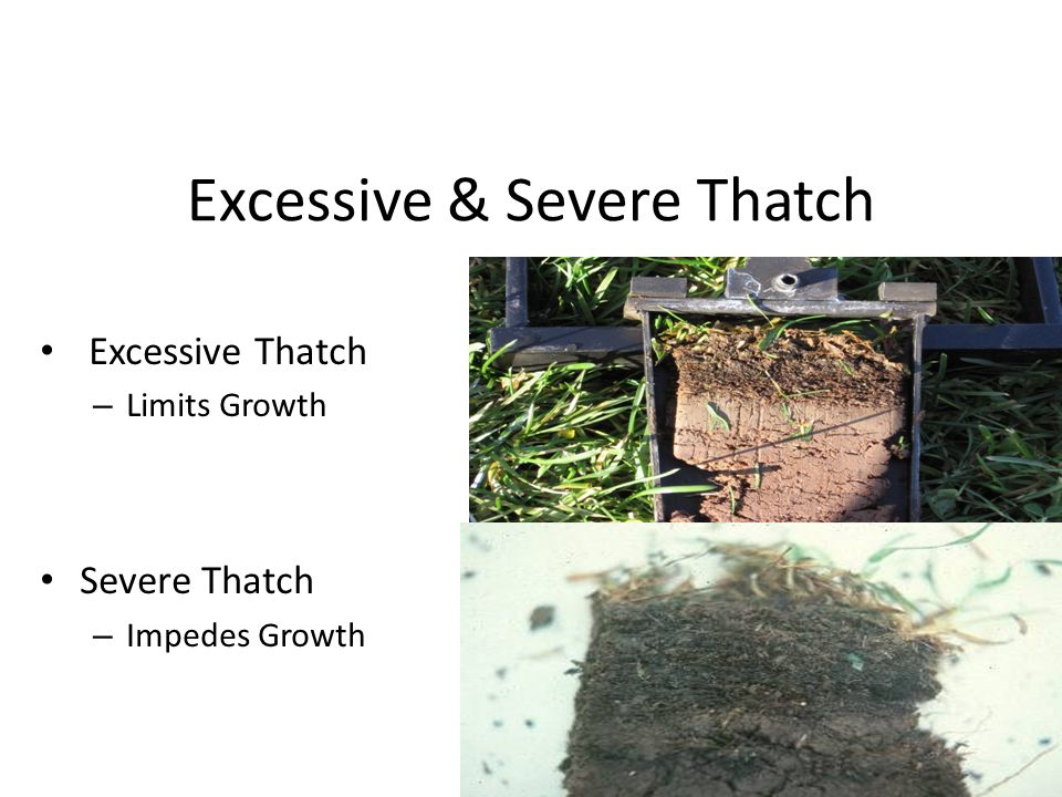 Excessive & Severe Thatch
