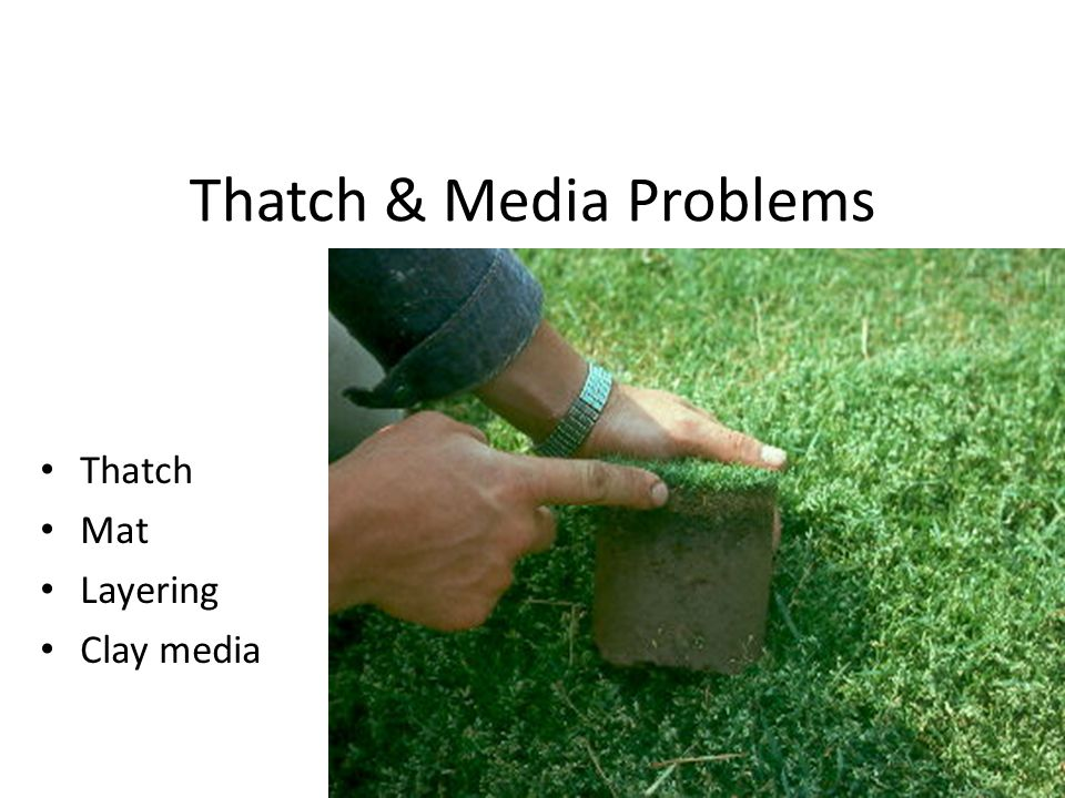 Thatch & Media Problems