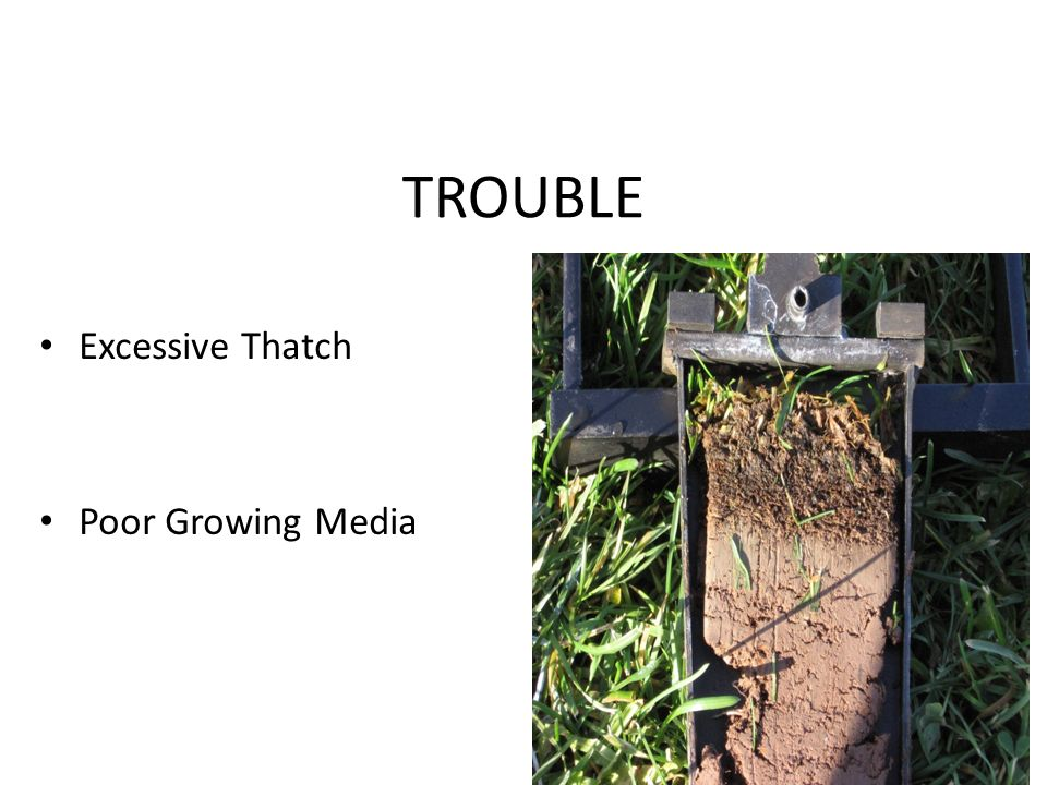 TROUBLE Excessive Thatch Poor Growing Media
