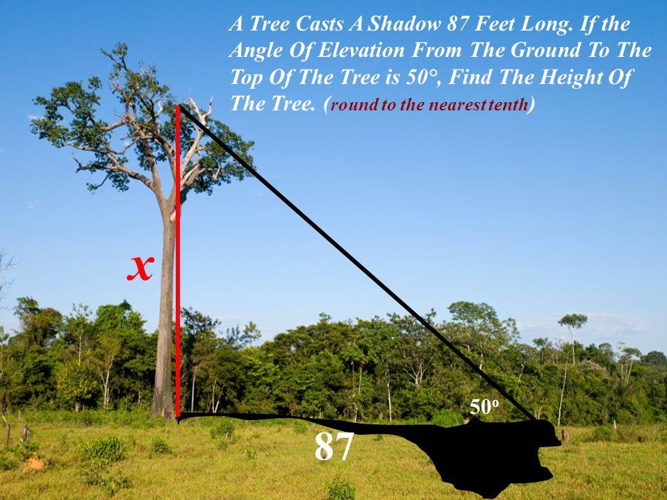 A Tree Casts A Shadow 87 Feet Long