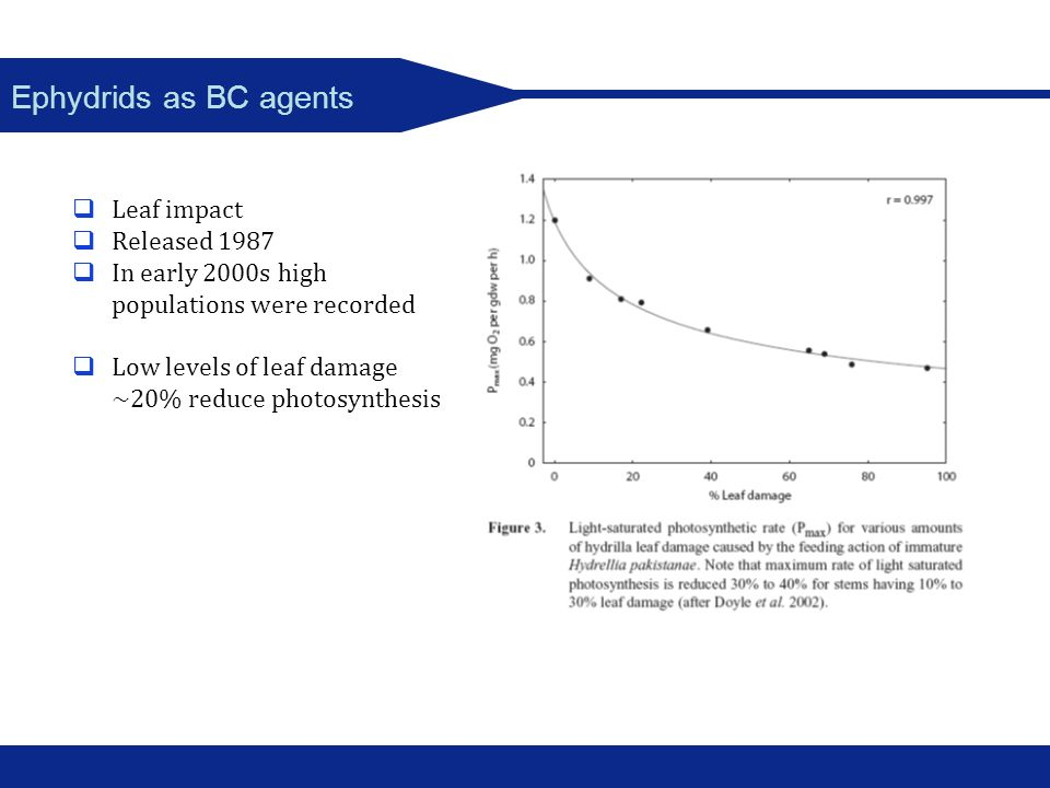 Ephydrids as BC agents Leaf impact Released 1987