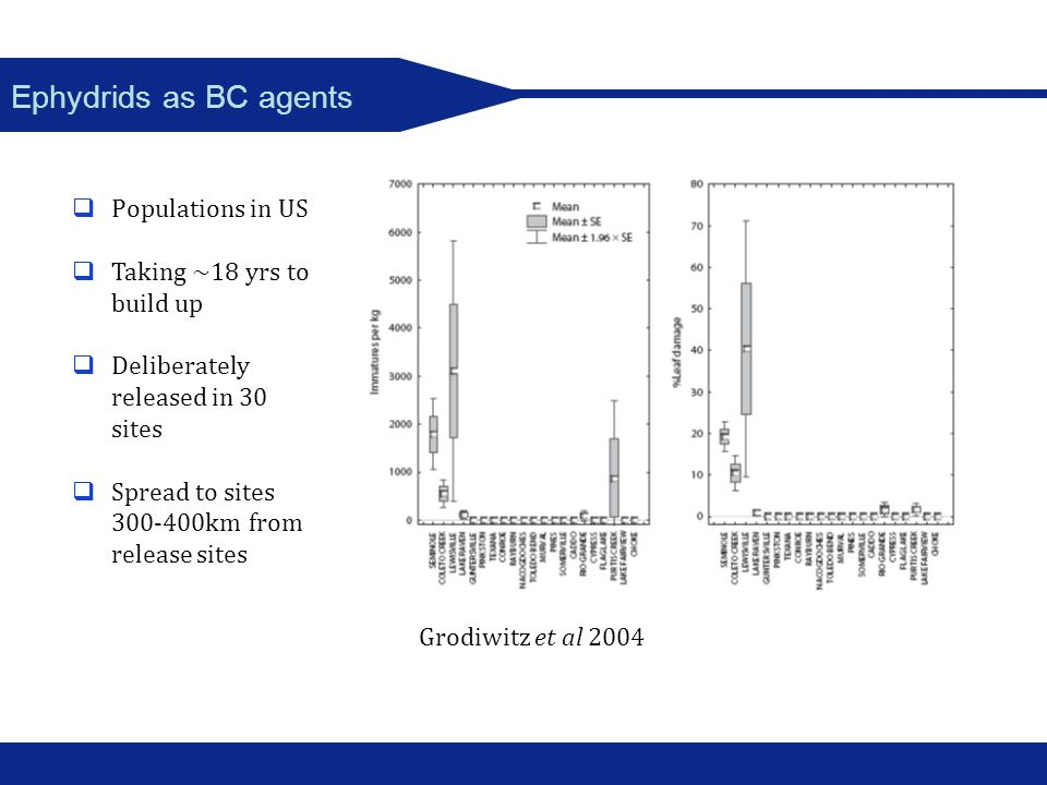 Ephydrids as BC agents Populations in US Taking ~18 yrs to build up