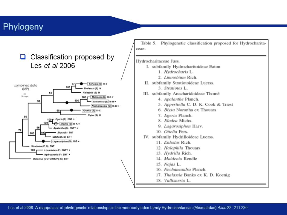 Phylogeny Classification proposed by Les et al 2006