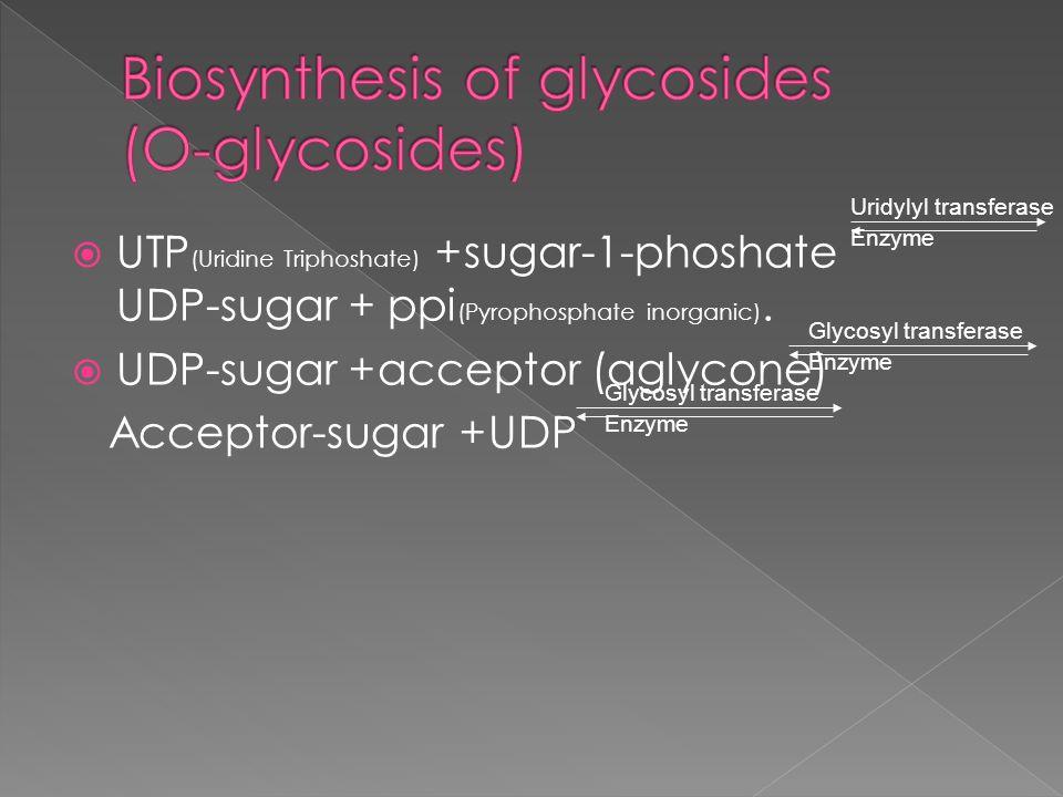 Biosynthesis of glycosides (O-glycosides)
