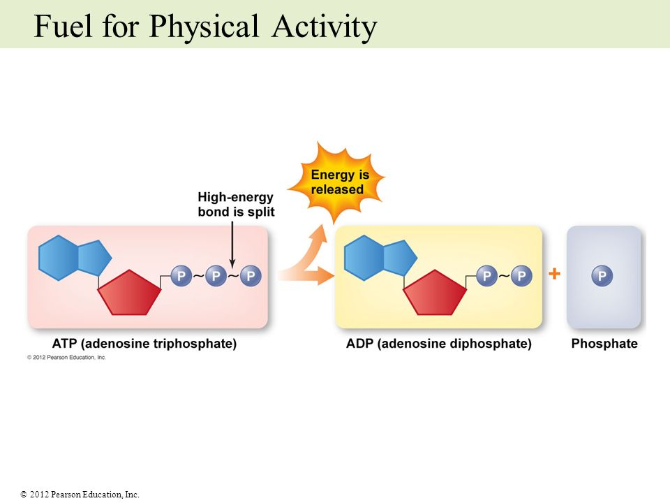 Fuel for Physical Activity