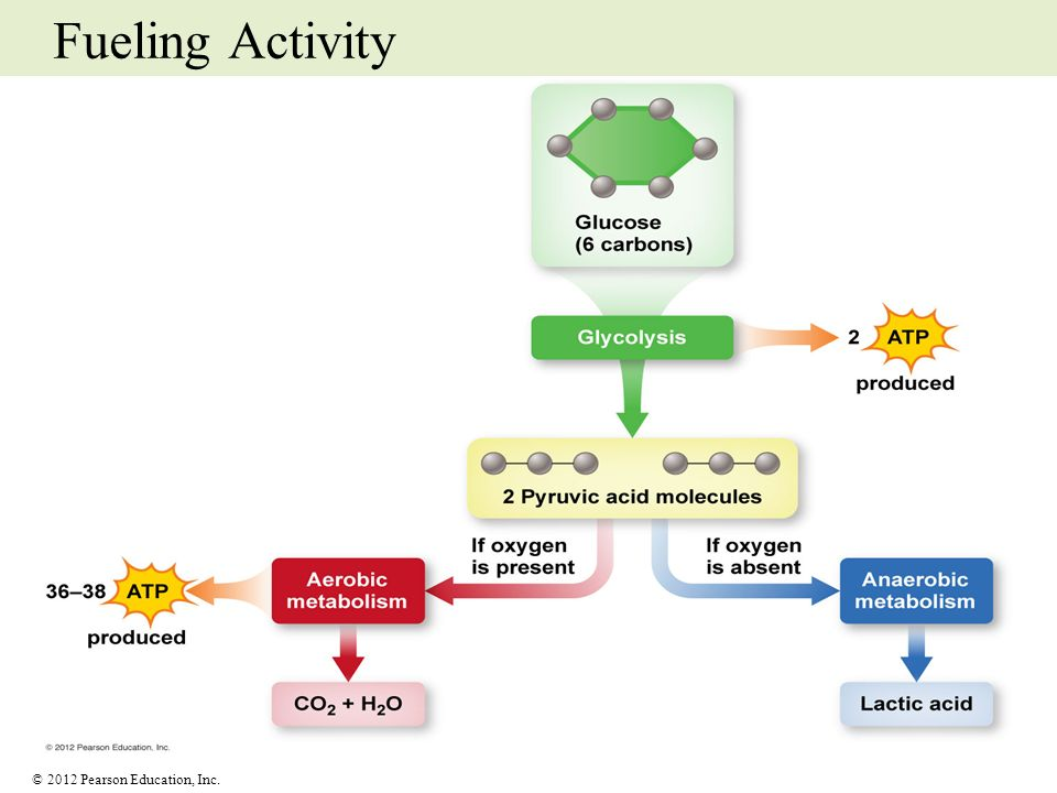 Fueling Activity