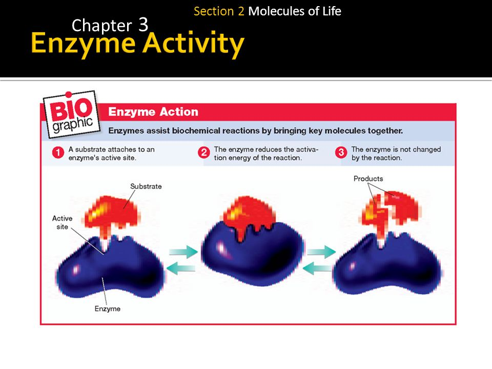 Section 2 Molecules of Life