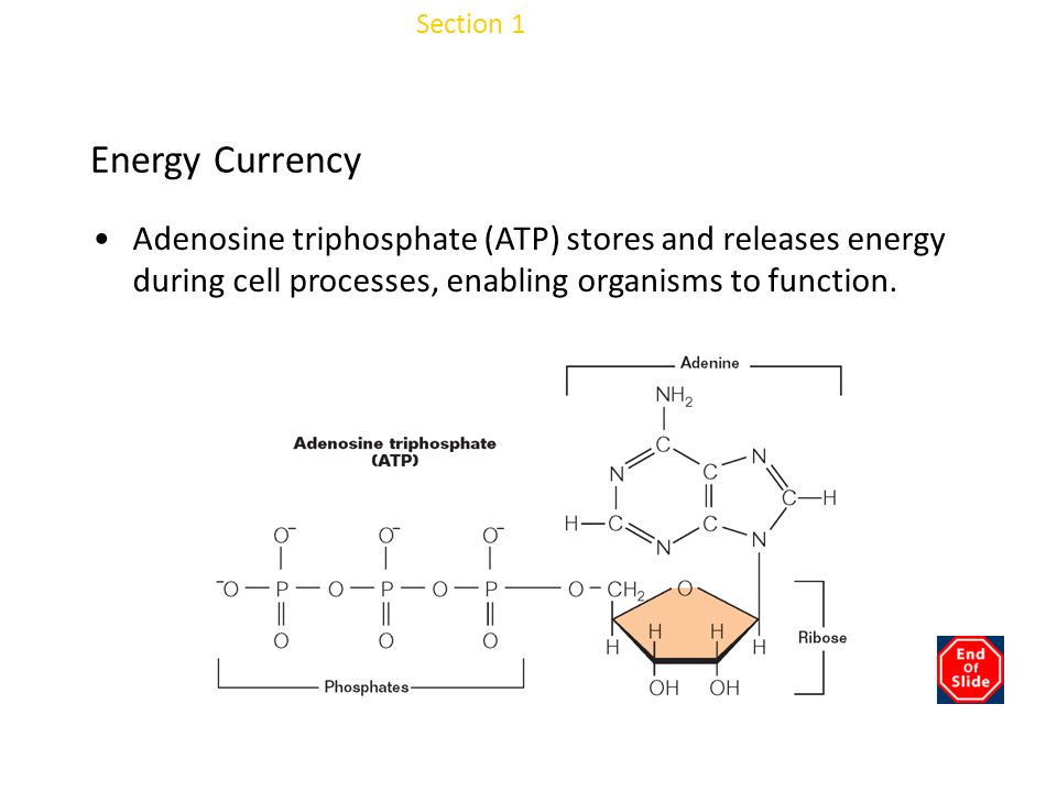 Chapter 3 Energy Currency
