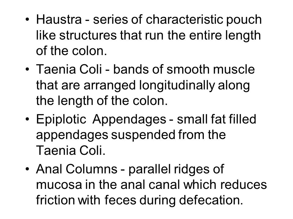 Haustra - series of characteristic pouch like structures that run the entire length of the colon.