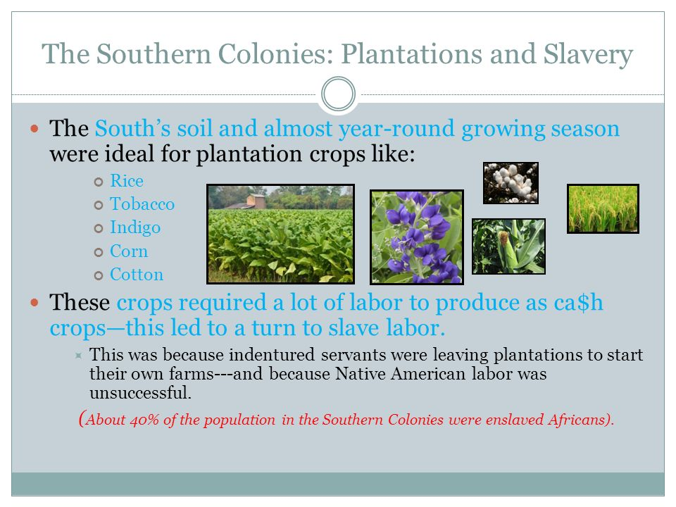 The Southern Colonies: Plantations and Slavery