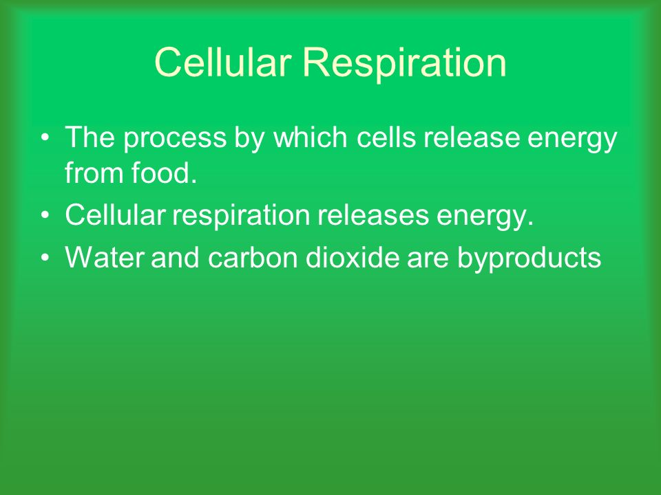 Cellular Respiration The process by which cells release energy from food. Cellular respiration releases energy.