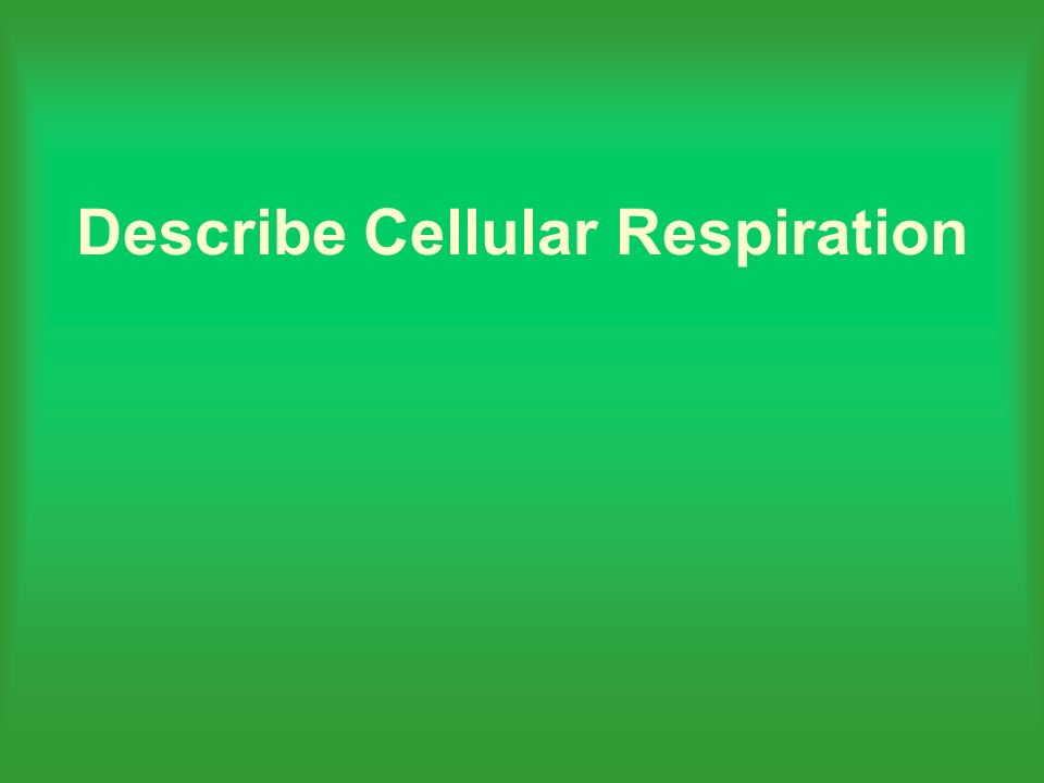 Describe Cellular Respiration