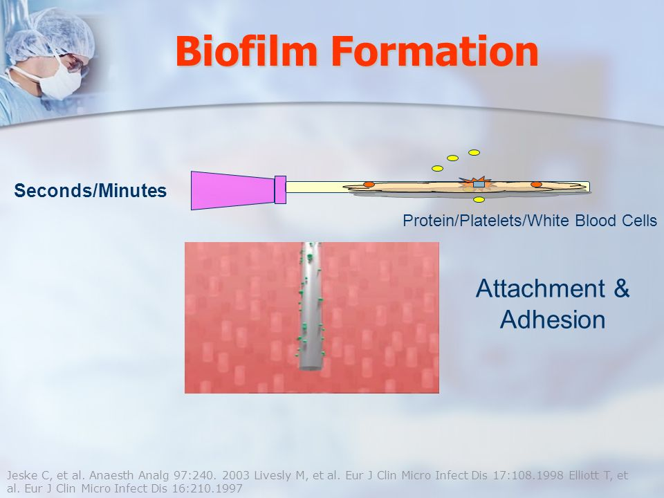 Biofilm Formation Attachment & Adhesion Seconds/Minutes