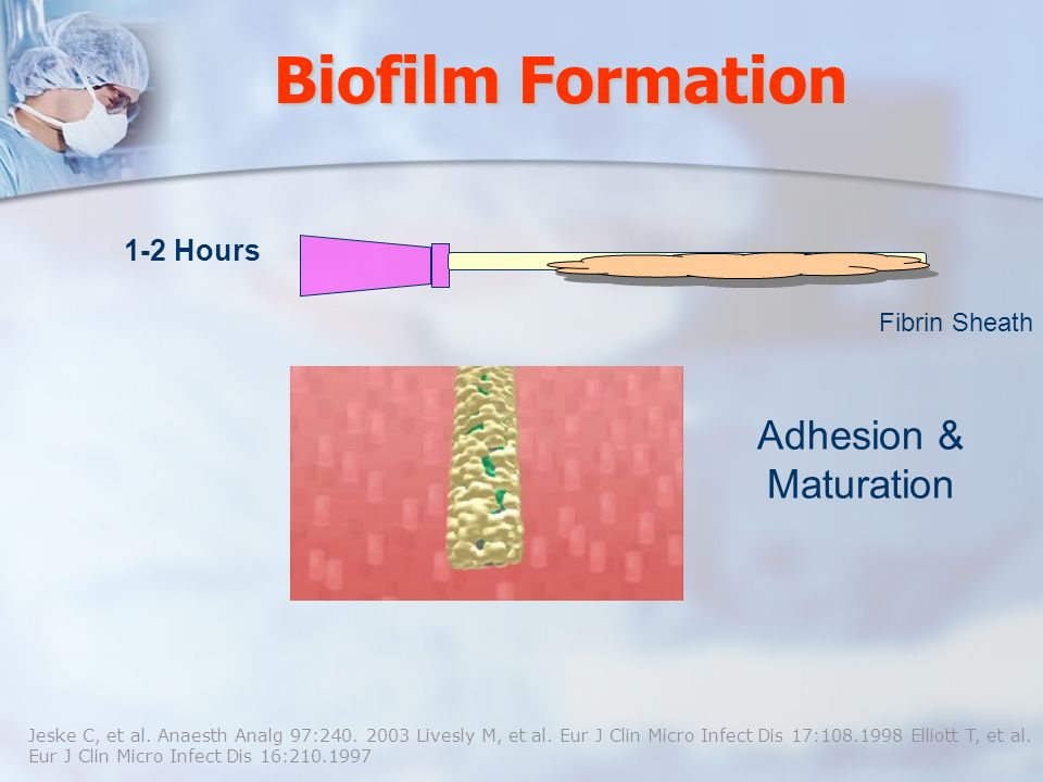 Biofilm Formation Adhesion & Maturation 1-2 Hours Fibrin Sheath