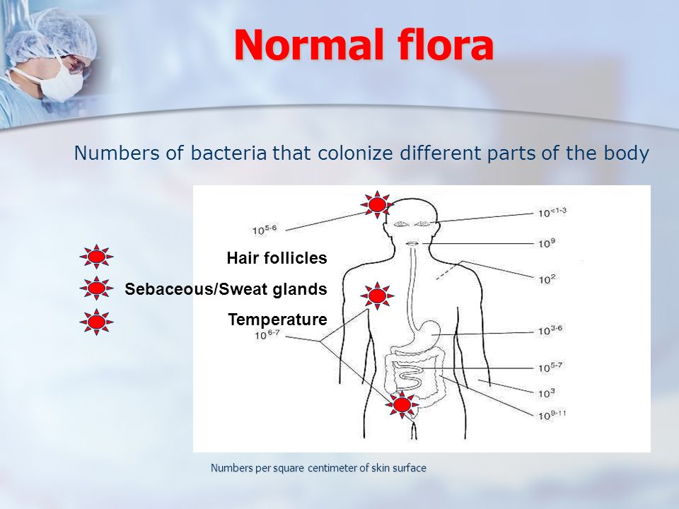 Normal flora Numbers of bacteria that colonize different parts of the body. Hair follicles. Sebaceous/Sweat glands.