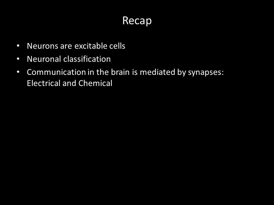 Recap Neurons are excitable cells Neuronal classification