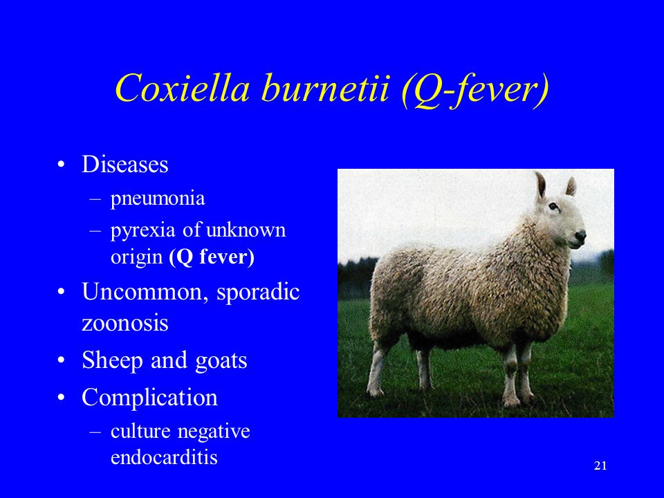 Coxiella burnetii (Q-fever)