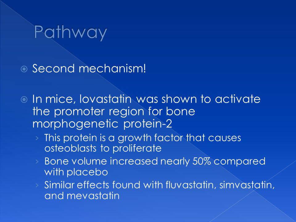 Pathway Second mechanism!