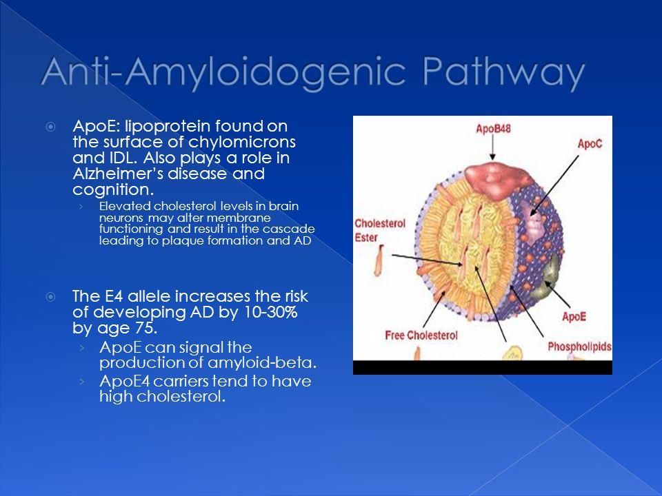 Anti-Amyloidogenic Pathway