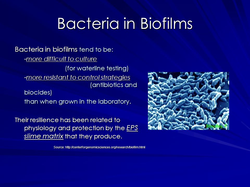 Bacteria in Biofilms Bacteria in biofilms tend to be: