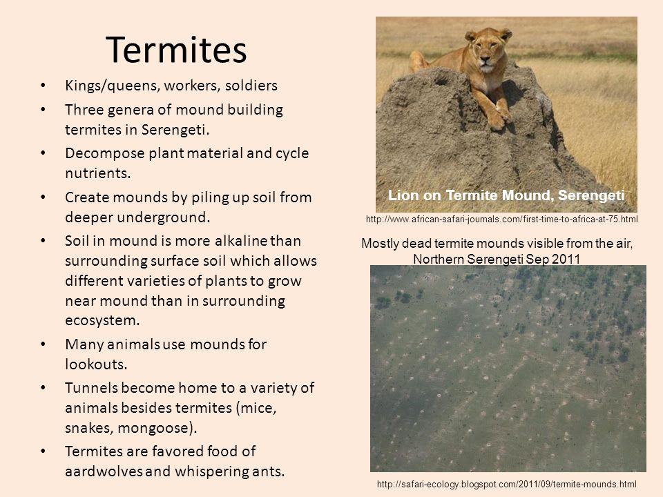 Termites Kings/queens, workers, soldiers