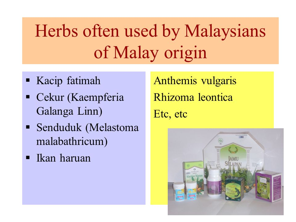 Herbs often used by Malaysians of Malay origin