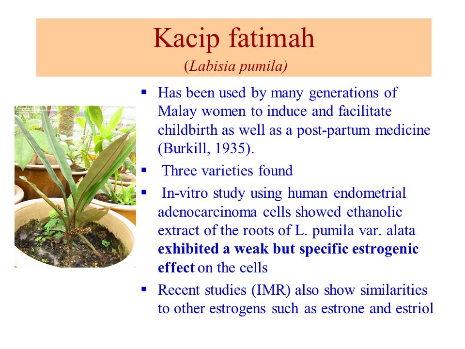 Kacip fatimah (Labisia pumila)