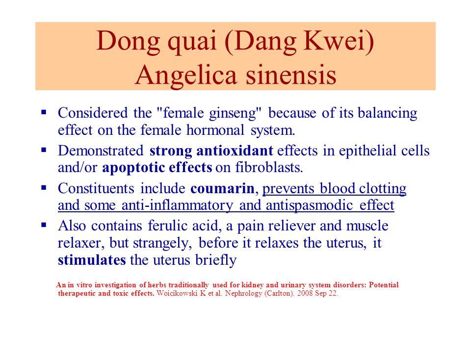 Dong quai (Dang Kwei) Angelica sinensis
