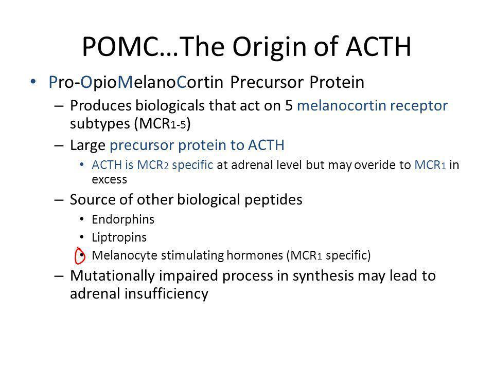 POMC…The Origin of ACTH