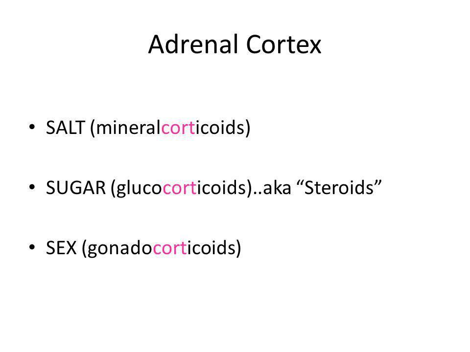 Adrenal Cortex SALT (mineralcorticoids)