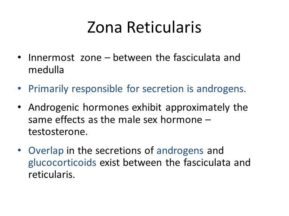 Zona Reticularis Innermost zone – between the fasciculata and medulla