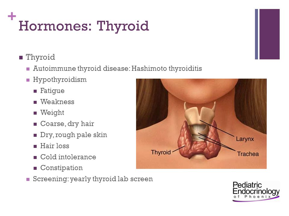 Hormones: Thyroid Thyroid