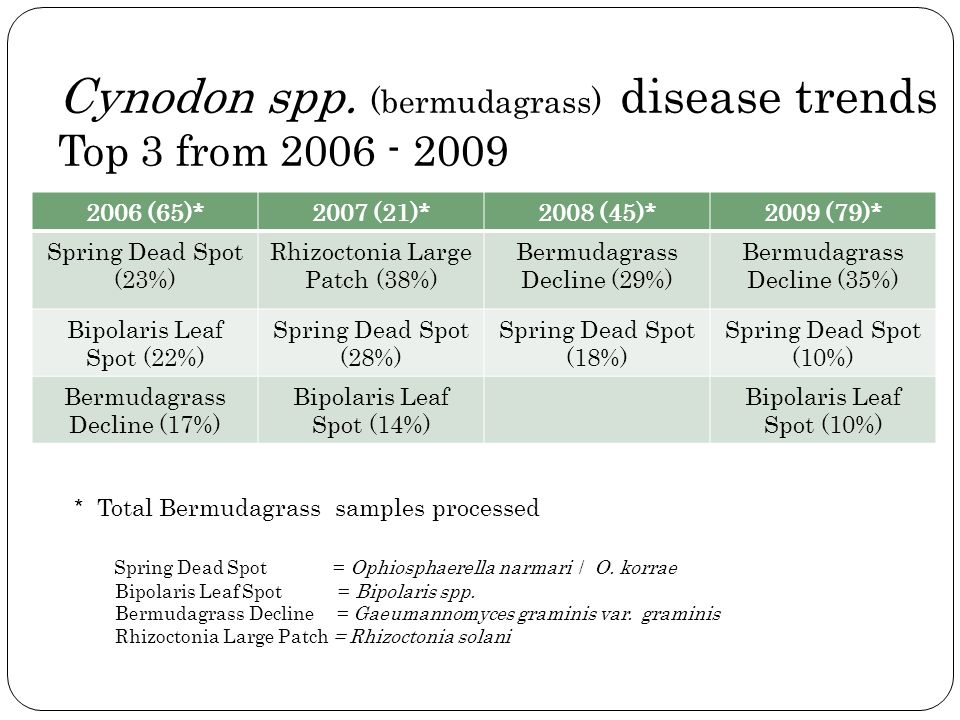 Cynodon spp. (bermudagrass) disease trends Top 3 from 2006 - 2009