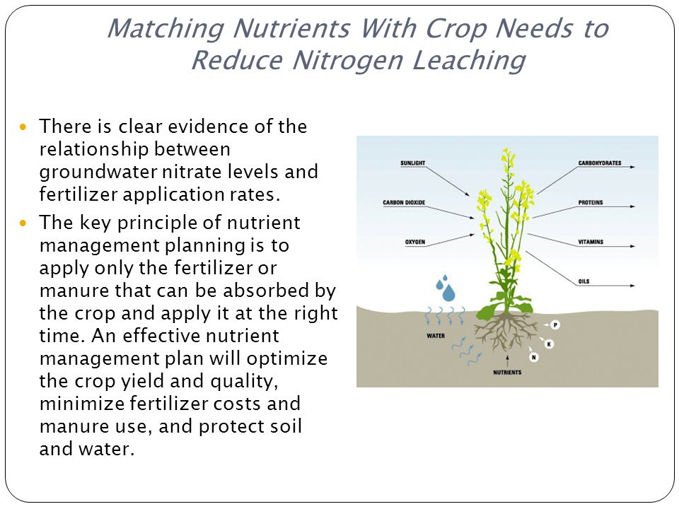 Matching Nutrients With Crop Needs to Reduce Nitrogen Leaching