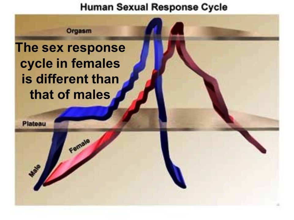 The sex response cycle in females is different than that of males