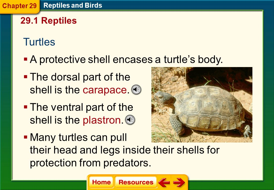 A protective shell encases a turtle's body.