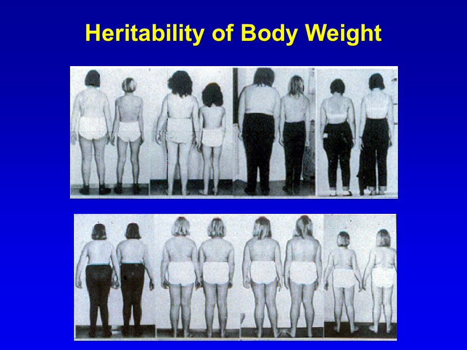Heritability of Body Weight