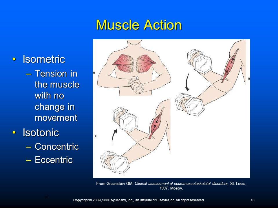 Muscle Action Isometric Isotonic