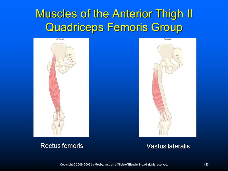 Muscles of the Anterior Thigh II Quadriceps Femoris Group