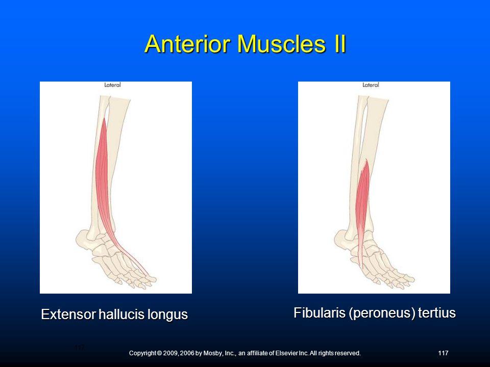 Anterior Muscles II Extensor hallucis longus
