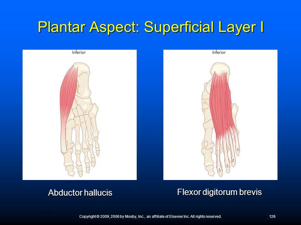 Plantar Aspect: Superficial Layer I