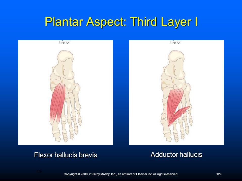 Plantar Aspect: Third Layer I