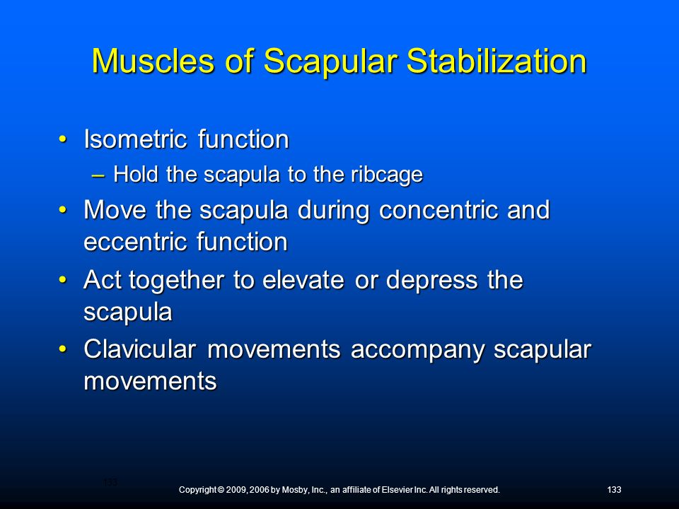 Muscles of Scapular Stabilization