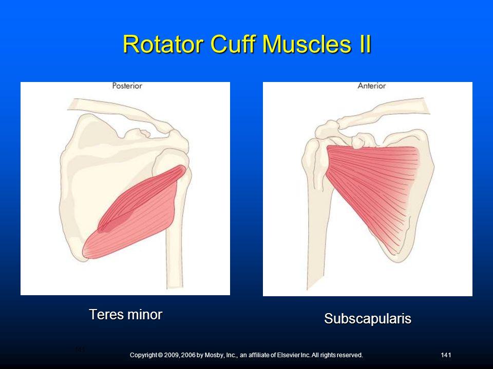 Rotator Cuff Muscles II