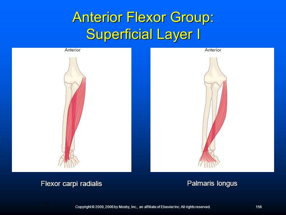 Anterior Flexor Group: Superficial Layer I