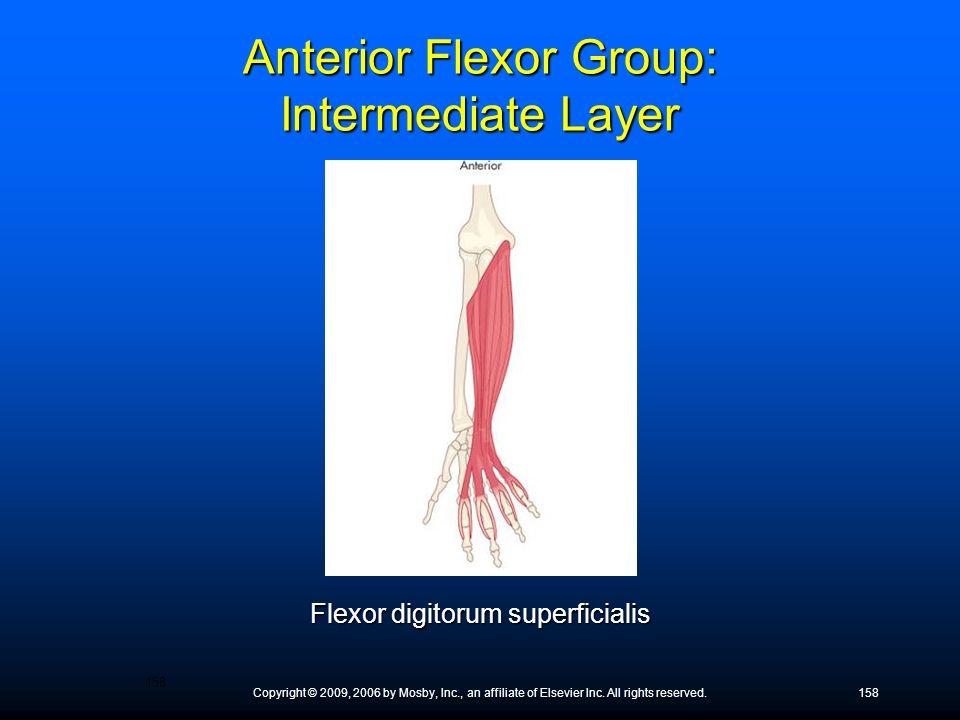 Anterior Flexor Group: Intermediate Layer